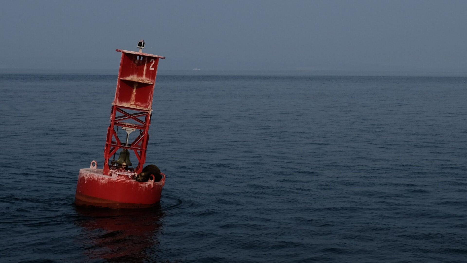 Datenschutz und Privatsphäre sind sogar für Seelöwen wichtig, die auf Bojen chillen