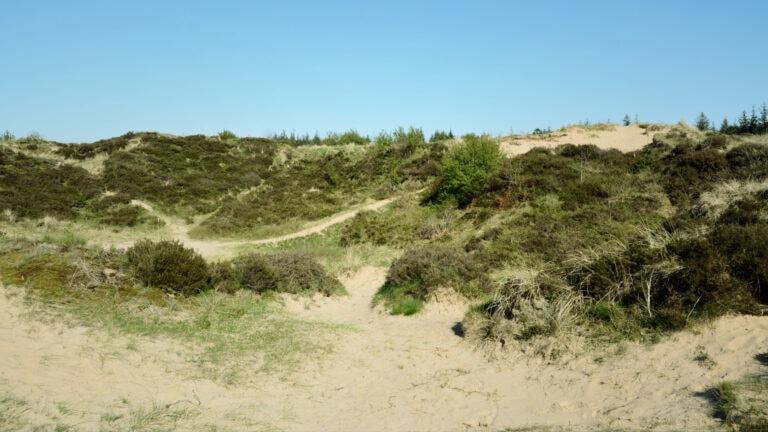 In Schleswig-Holstein findest du sogar im Binnenland Dünen – ein Übrigbleibsel der letzten Eiszeit